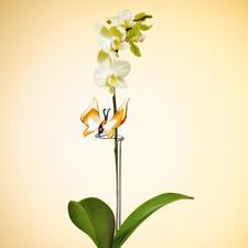 """Orchideenstab """"Kolibri"""" oder """"Schmetterling"""" - Handgefertigte Glaskunst gibt Ihren Orchideen festen Halt. Aus feinstem Farbglas und stützendem Klarglasstab."""