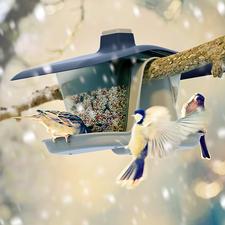 """Vogelfutterhaus """"Multi"""" - Hängt sicher am Baum. Sitzt perfekt am Balkon-Geländer. Das flexibel positionierbare Vogelfutterhaus."""