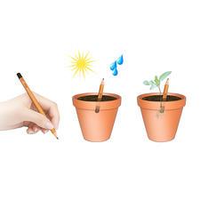 Schreiben – einpflanzen – etwas Sonnenlicht und Wasser – und nach ein paar Tagen spriessen die ersten Keimlinge.