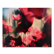 Sabine Wenzel – Mohn Nr. 3 - Ein typischer Wenzel: Einzigartige Kombination von Fotografie und Unschärfe – erstmals auf DIBOND®. 30 Exemplare. Masse: 100 x 80 cm