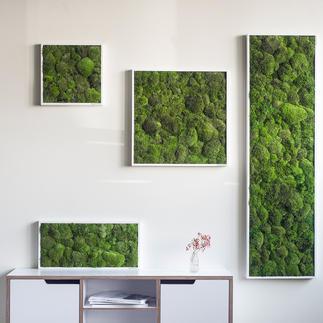 Kugelmoos-Bild Echtes Moos – Blickfang an Ihrer Wand. Speziell entwickelte Konservierung: 100 % Natur – 0 % Pflege.