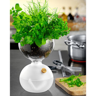 Design-Gewächsglas Von Holmegaard – seit 1825 Dänemarks Pionier für feinste, mundgeblasene Glaskunst.