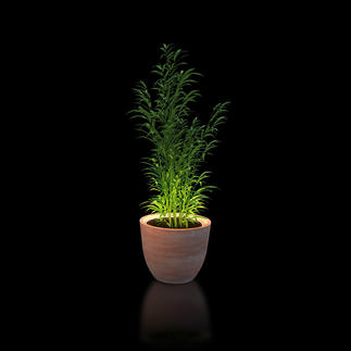 Beleuchtungsring für Pflanzen Setzen Sie Ihre Pflanzen effektvoll in Szene. Umrahmt sie stilvoll mit warmweissem Licht.