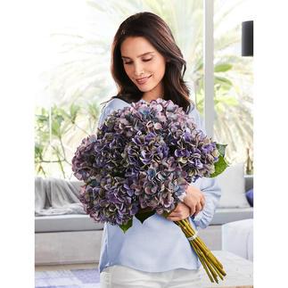 Hortensienstrauss Blüten von unvergänglicher Schönheit. Als elegantes Dutzend wie vom Floristen fertig gebunden.