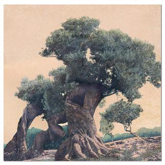 Ingo Wegerl – Olivenbaum Ingo Wegerls zweite Leinwandedition – zu 100 % handüberarbeitet. Niedrig limitiert – in zwei Grössen erhältlich. Masse:  140 x 140 cm