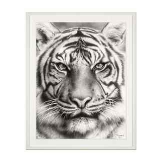 Koshi Takagi – Eyes of the tiger Fotorealistische Bleistiftzeichnung. Mit über 1 Million handgemalten Strichen. Koshi Takagis erste Edition seiner Raubkatzen-Serie. 90 Exemplare. Masse: 90 x 120 cm