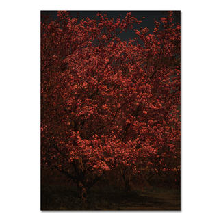 Adam Goodison – Passage V Adam Goodison: Fotografien wie Gemälde – Meisterhand ohne Pinsel. Erste Edition des Künstlers. 40 Exemplare.