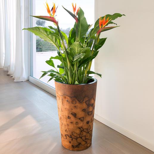 Palmholz-Pflanztopf - Exotischer Pflanztopf. Oder aussergewöhnliche Bodenvase. Aus seltenem, argentinischem Palmholz.
