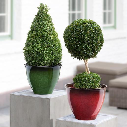 Leicht-Pflanzkübel - So schön wie glasierte Keramik – aber ca. 66 % leichter, frostfest und bruchsicher.