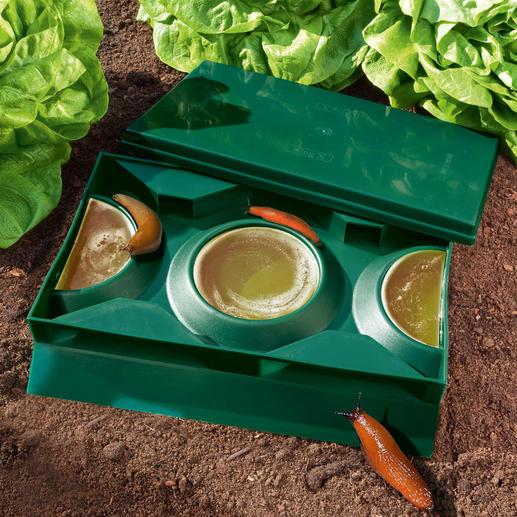 Bier-Schneckenfalle Slug X, 2er-Set - Kein Gift, keine Chemikalien gefährdet Ihre Haustiere und willkommene Gartenbewohner.