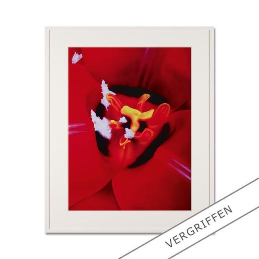 "Marc Quinn: ""Close Up 1"" - Fotorealistische Edition des britischen Weltstars Marc Quinn. 100 Exemplare."