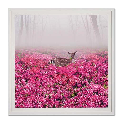 """Pink Deer"", gerahmt 110 x 110 cm."