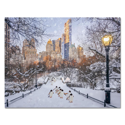 "Robert Jahns – New York City Penguins II Robert Jahns: Einer der populärsten Instagram-Stars. 50.000 Likes über Nacht für das Motiv seiner ausverkauften Edition ""New York City Penguins"". Neueste Edition ""New York City Penguins II"" exklusiv bei Pro-Idee. Masse: 110 x 85 cm"