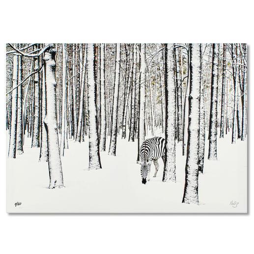 Robert Jahns – Snow Zebra Robert Jahns: Einer der populärsten Instagram-Stars. 40.000 Likes! Snow Zebra – jetzt als Leinwand-Edition. Exklusiv bei Pro-Idee. Masse: 100 x 70 cm