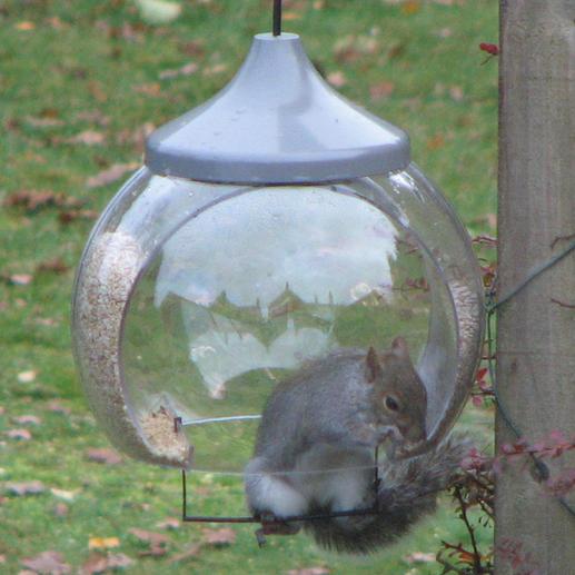 """""""Hallo, Ich dachte Sie würden gern Ihre Vogelfutterglocke """"in Aktion"""" sehen. Ich habe die Sitzstange eingehängt und schauen Sie mal wer schnell herausfand wofür diese gut ist – sogar viel früher als die Vögel es taten. (...) Ein tolles Produkt."""" Beste Grüsse, Malcolm H., Grossbritannien, 22.11.2010"""
