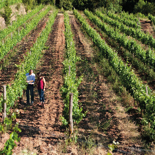 "Flor d'Englora 2011, Baronia del Montsant, Montsant, Spanien ""… dicht, (…) kraftvoll, (…) und dennoch sehr fein."" 90 Punkte. (Robert Parker, Wine Advocate 200, 02/2012)"