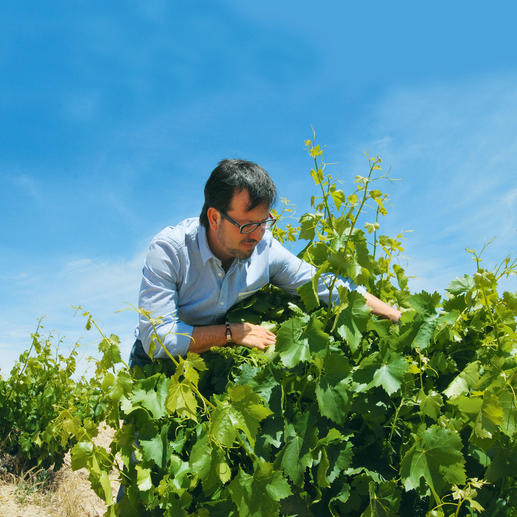 Tempranillo Blanco 2016, Rodríguez Sanzo, Rioja, Spanien Weisser Tempranillo? Ja – doch äusserst selten.