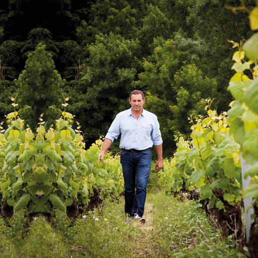 Muscadet Vieilles Vignes 2015, Domaine Salmon, Loire, Frankreich 96 (!) Punkte bei den Decanter World Wine Awards 2016. (www.decanter.com)