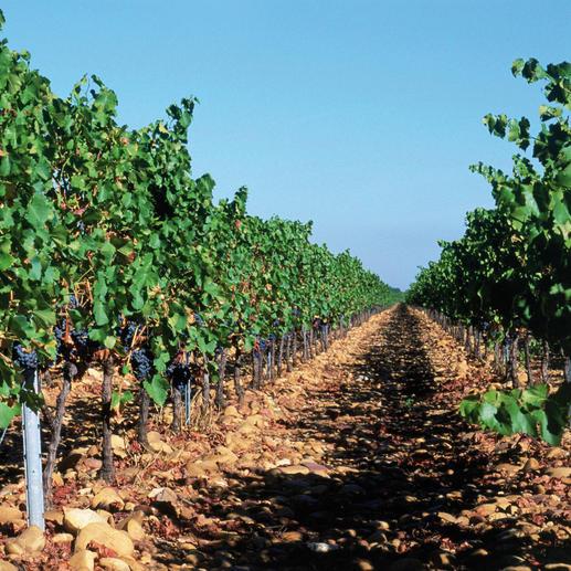 Premier Terroir 2015, Château Beauchêne, Côtes du Rhône AOC, Frankreich Ein Glück, dass dieser Wein nicht Châteauneuf du Pape heissen darf.